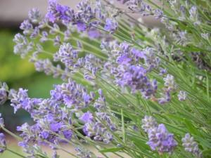 herb-802851_1280